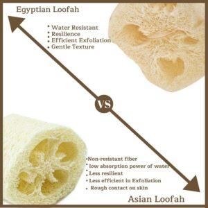 Egyptian Loofah Vs Asian Loofah