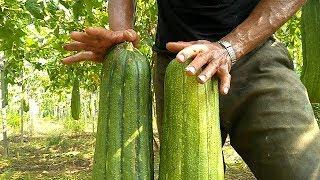 real loofah sponge